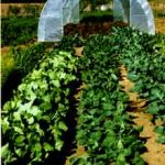 Allsun Farm (Organic produce)